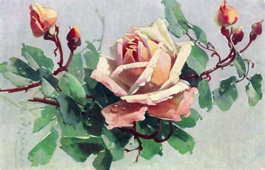 Catharina Klein postcard